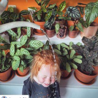 Zoooo, gaat ze lekker van groeien! (Bedankt 'ontaarde' moeder Irma!)  #watervoordeplantjes #grotergroeien #watergeven #moeder #moeders #clubvanontaardemoeders
